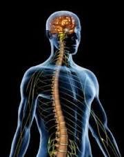 linea media y médula espinal