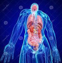 organos-4
